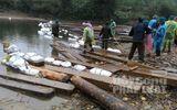 220 phiến gỗ lậu vừa bị phát hiện ở khu rừng biên giới