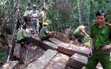 Hàng chục mét khối gỗ trái phép cất giấu trong rừng đặc dụng