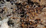 Hàng trăm sư tử biển chết một cách bí ẩn trên bãi biển