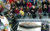Cá ngừ vây xanh nặng 135kg dạt vào bờ biển Anh
