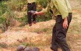 Tái thả hàng chục cá thể rùa về môi trường tự nhiên