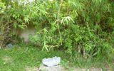 Ly kỳ chuyện hòn đá biết chữa bệnh cho phụ nữ và trẻ em  gây xôn xao ở Hà Tĩnh