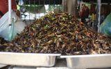 Xơi côn trùng để... tẩm bổ và chữa bệnh?!