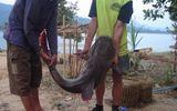 Bắt vụ nhập lậu 700 kg cá lăng từ Trung Quốc