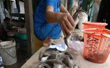 Chỉ ở Việt Nam: Javel tẩy hải sản, bạch tuộc làm từ cao su