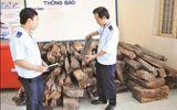 Bắt giữ xe biển số Lào vận chuyển gỗ trắc trái phép