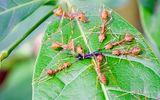 """Thế giới côn trùng và những tập tính """"quái gở đến đáng sợ"""""""