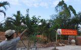 Thực hư tin đồn Phật hiện trên cây khiến ngàn người xôn xao