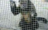 """Cận cảnh """"sở thú chết chóc"""" nhất thế giới tại Indonesia"""