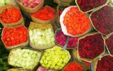 Thương lái Trung Quốc vào Đà Lạt thu gom hoa cho lễ Tình nhân