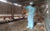 Kon Tum: 600 con gà mắc dịch cúm gia cầm H5N1