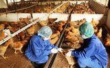 21 tỉnh xuất hiện dịch cúm gia cầm H5N1