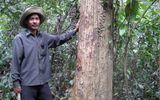 Chuyện lạ về khu rừng hễ ai chặt cây là gặp họa