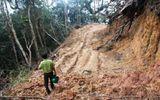 Phá rừng ở Khu BTTN Ngọc Linh: Lòng vòng truy trách nhiệm