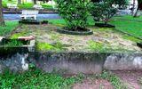 Bí ẩn ngôi mộ cổ giữa khuôn viên trường đại học