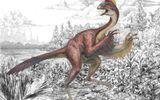 Loài khủng long có đặc điểm giống chim