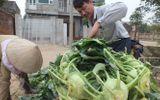 Hành trình tăng giá rau từ tay nông dân đến tay người tiêu dùng