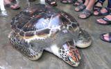 Ngư dân Huế lại thả rùa quý về với Đại dương