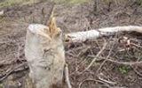 Khởi tố đối tượng dùng cưa xăng phá gần 1ha rừng
