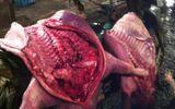 Theo chân tiểu thương đưa thịt lợn chết, bốc mùi về quán cơm