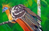 Điểm mặt các loài chim độc đáo nhất quả đất