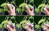 Khám phá 4 loài cây có khả năng đặc biệt giống con người