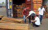 Khởi tố vụ buôn lậu gỗ lớn nhất Bình Phước