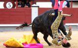 """Bò tót biến thành """"bò điên"""" húc đấu sĩ  ở Tây Ban Nha"""