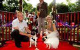 Chi 70 triệu tổ chức đám cưới cho… cún cưng