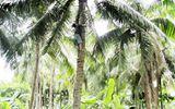 Nghệ An: Đứt dây điện khi hái dừa, 2 thanh niên tử vong
