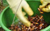 Lai Châu: Ngộ độc bọ xít đen, 1 người chết, 20 người nhập viện