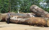 Tái diễn nạn khai thác gỗ trái phép tại Khu BTTN Nam Nung