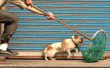 Xuất hiện đường dây trộm chó rồi đòi tiền chuộc