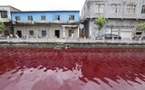 Hãi hùng dòng sông chuyển màu máu chỉ sau 1 đêm
