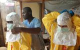 Khác biệt giữa Ebola và sốt xuất huyết do vi rút dengue Việt Nam