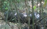 Phát hiện xác chết bị cắt rời đầu trong rừng