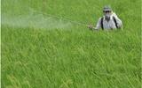 Ô nhiễm môi trường vì thuốc bảo vệ thực vật