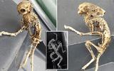 Phát hiện bộ xương kỳ lạ giống sinh vật ngoài hành tinh ở Anh
