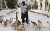 Tài xế Syria chăm sóc 150 con mèo hoang bỏ rơi vì chiến tranh