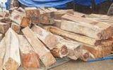 Liên tiếp bắt giữ hai vụ vận chuyển gỗ lậu trong một ngày