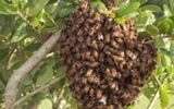 Một người đàn ông bị ong đốt tử vong trong lúc phát rẫy