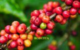 """Cà phê Việt Nam """"cứu nguy"""" cho thị trường thế giới"""