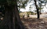 Hà Tĩnh: Phá rừng phòng hộ và trái đắng từ dự án nuôi tôm