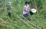 Voi rừng về làng, tàn phá hoa màu tại Quảng Nam