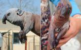 TQ: Xôn xao sinh vật kỳ dị thân lợn, đầu voi