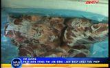 An Giang: Bắt giữ 220kg tim lợn đông lạnh nhập lậu