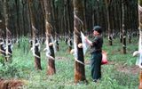 Tập đoàn Cao su Việt Nam sai phạm hơn 8.366 tỷ đồng