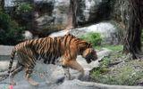 """Vườn thú tiền tỷ trong khu du lịch Đại Nam của ông Dũng """"lò vôi"""""""