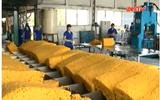 Xử lý sai phạm tại Tập đoàn công nghiệp cao su Việt Nam
