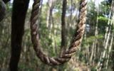 Khu rừng có hàng nghìn người tự sát ở Nhật Bản